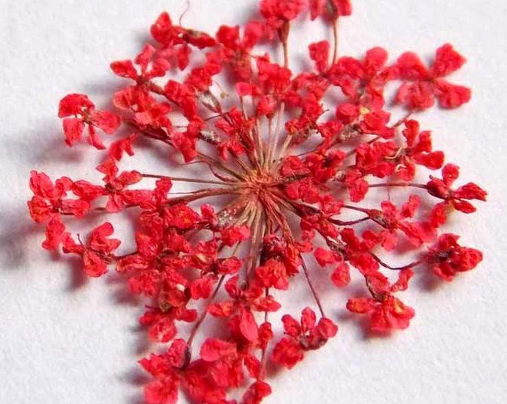 сухоцветы зонтики для маникюра