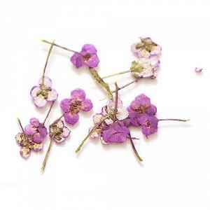 маникюр с сухоцветами